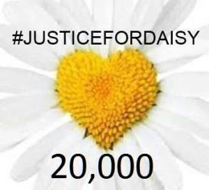 daisy justice hashtag
