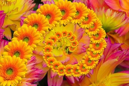 flower-807796_1920