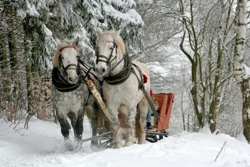 sleigh-ride-549727_1920