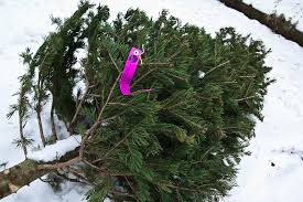 Christmas tree discarded